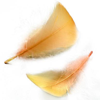 Federn in orange, zum Dekorieren