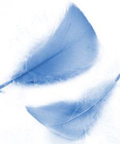 Federn in hellblau, zum Dekorieren