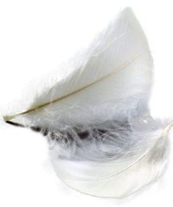 Federn in weiß, zum Dekorieren