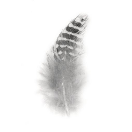 Federn in schwarz/weiß, zum Dekorieren