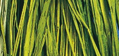 Viskosebast zum Basteln in maigrün