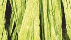 Rayher Bast matt, hellgrün