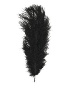 Straußenfeder schwarz, zum Basteln