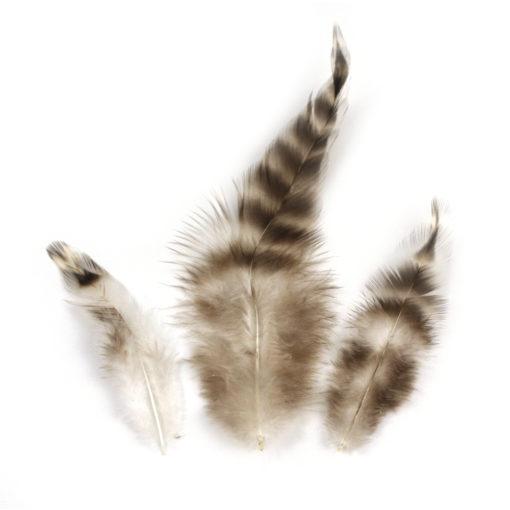 chinchillafeder 7,5-9 cm naturfarbig