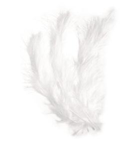 flauschfeder weiß 10-15 cm